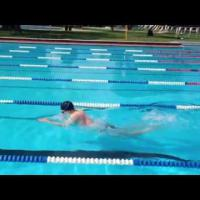Breaststroke Drill - Breaststroke Arms Dolphin Kick