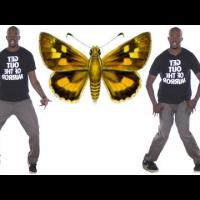 How to Do the Butterfly Dance